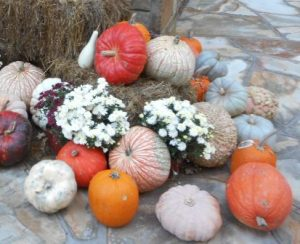 Colorful pumpkins and mums--fall's here!